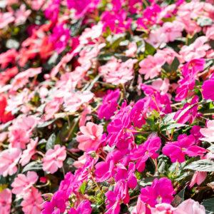 Blumenpracht-im-Gräflichen-Park